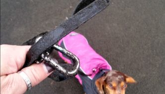 Best Leash for Hiking With Your Dog in Wet Weather
