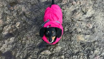 Hurtta Summit Parka Prepares Little Texas Dog for PNW Winter