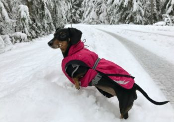 4 Lessons Learned During My Dog's First Snow Adventure