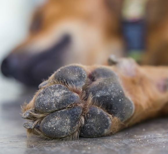 How a dog's feet work in the cold