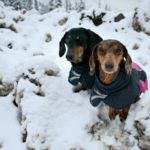 Never Fear: Sizing for Hurtta Dog Jackets is Easy!