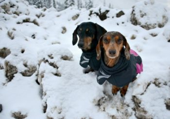 How to Choose the Right Size Hurtta Jacket For Your Dog