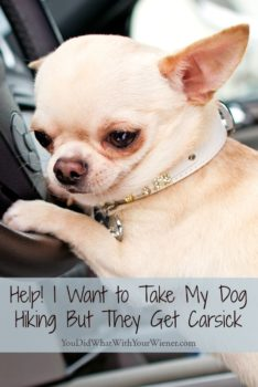 Tips for keeping your dog from getting sick in the car