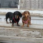 The Best 5 Dog Friendly Ghost Towns Near Seattle