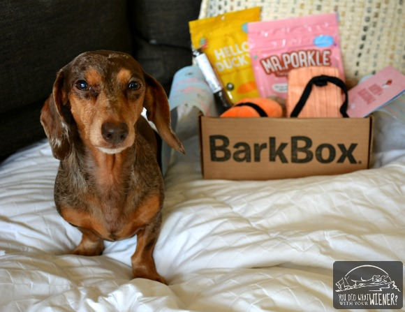 Inside the March 2017 BarkBox