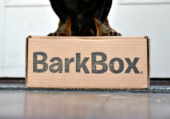 BarkBox Subscription: Fun, Unique Dog Goodies in the Mail