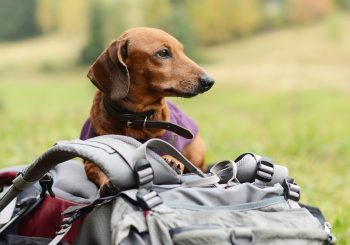 How to Get Your Dog Ready for Hiking Season