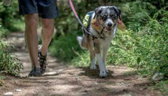 7 Tips for Handling Off-Leash Dogs While Hiking