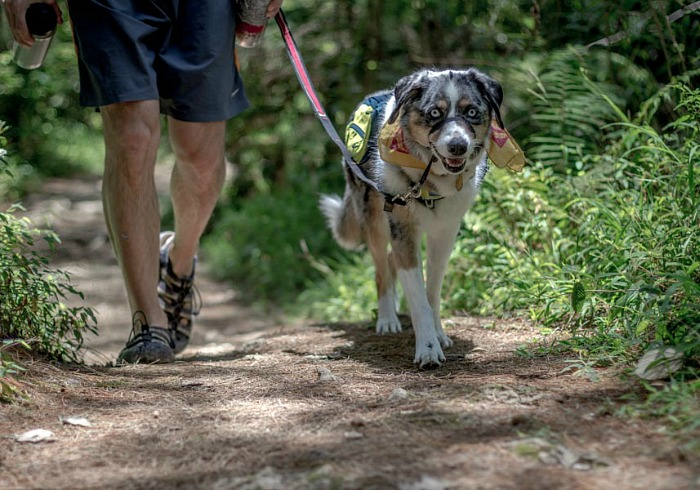 Hiking With Your Dog On-leash is a Courteous Thing to Do
