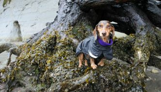 Dog Friendly Urban Hiking Adventure: Point Defiance