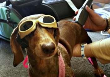 Can Cold Laser Therapy Benefit My Dog?