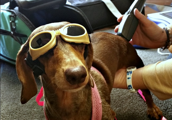 Can Cold Laser Therapy Benefit My Dog