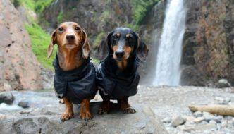 5 Easy Dog Friendly Waterfall Hikes in Western Washington