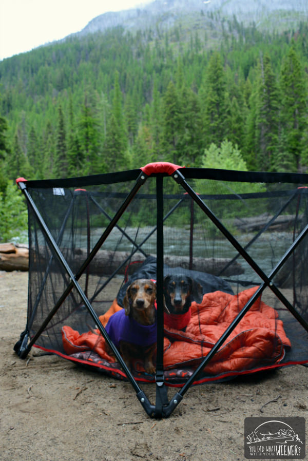 Carlson Portable Pet Pen for Camping with Dogs
