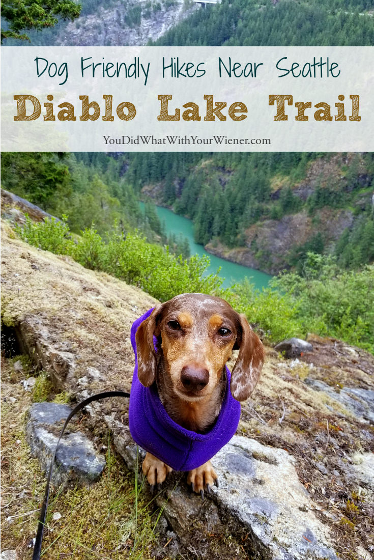 Diablo Lake Trail: A Dog Friendly Hiking Trail Near the North Cascades National Park and Seattle