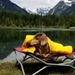 10 Must-Have Items for Your Next Dog Friendly Camping Trip