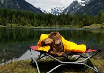 Dog Camping Gear: 10 Must-Have Items for Your Next Adventure