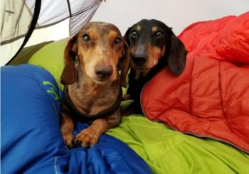 5 Different Ways to Camp With Your Dog