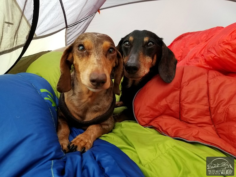 Camping with your dog in a tent is a lot of fun