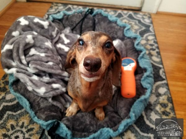 How do you choose a cold laser for your dog?