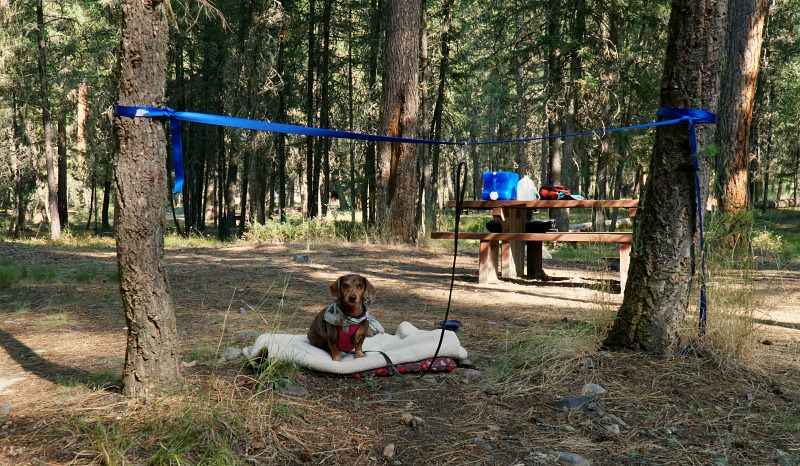 One way to contain your dog while camping