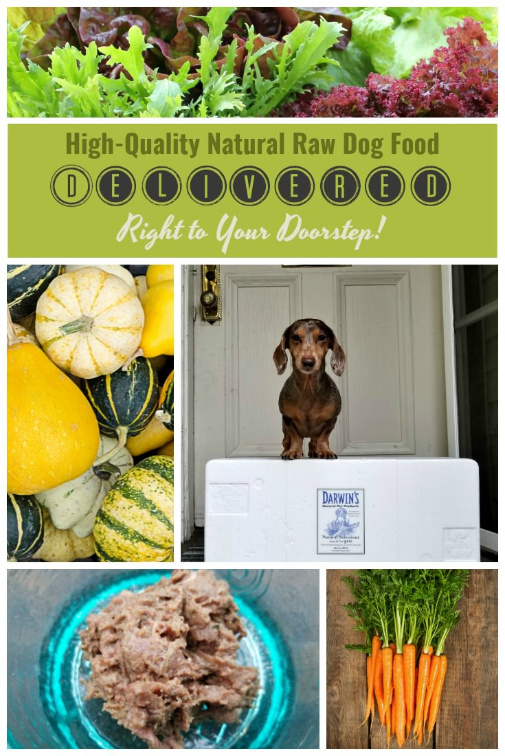 Darwin's Natural Raw Dog Food is made with free-range meats and organic vegetables