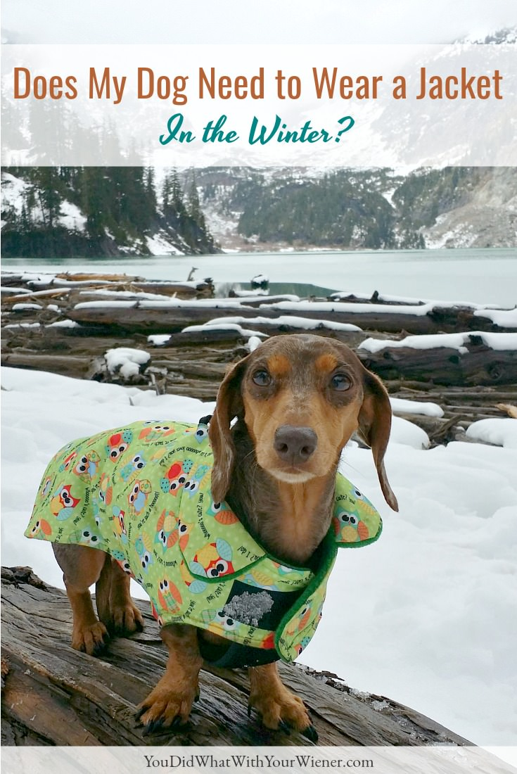 Some dogs shouldn't hike in the winter without a jacket