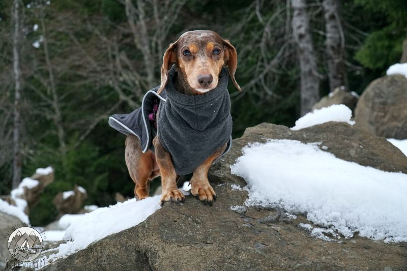 A jacket can help keep your dog happy and safe when hiking in winter