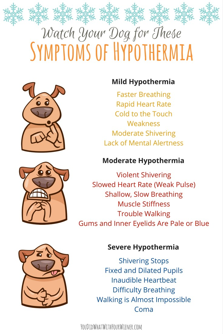 Symptoms of Hypothermia in Dogs