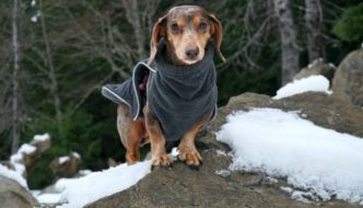 10 Important Safety Tips for Hiking with Your Dog In Winter