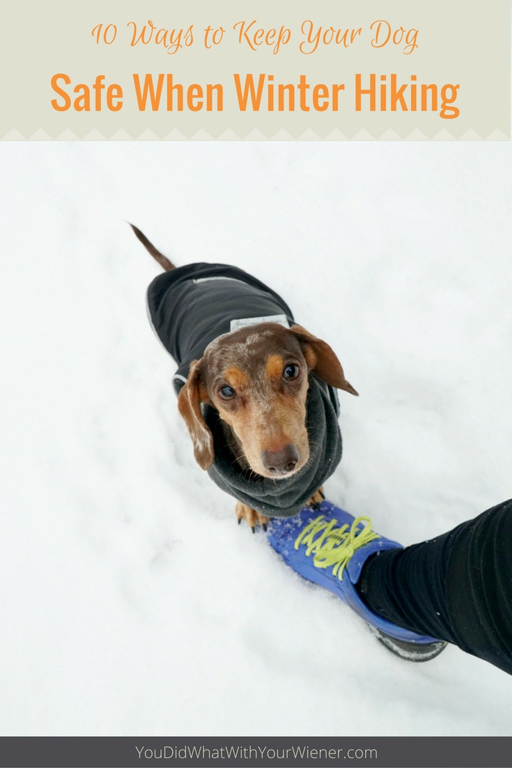 Hiking with your dog in the snow this winter? These tips will help keep them safe.
