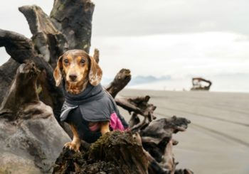 Fort Stevens State Park: A Dog Friendly Yurt Adventure