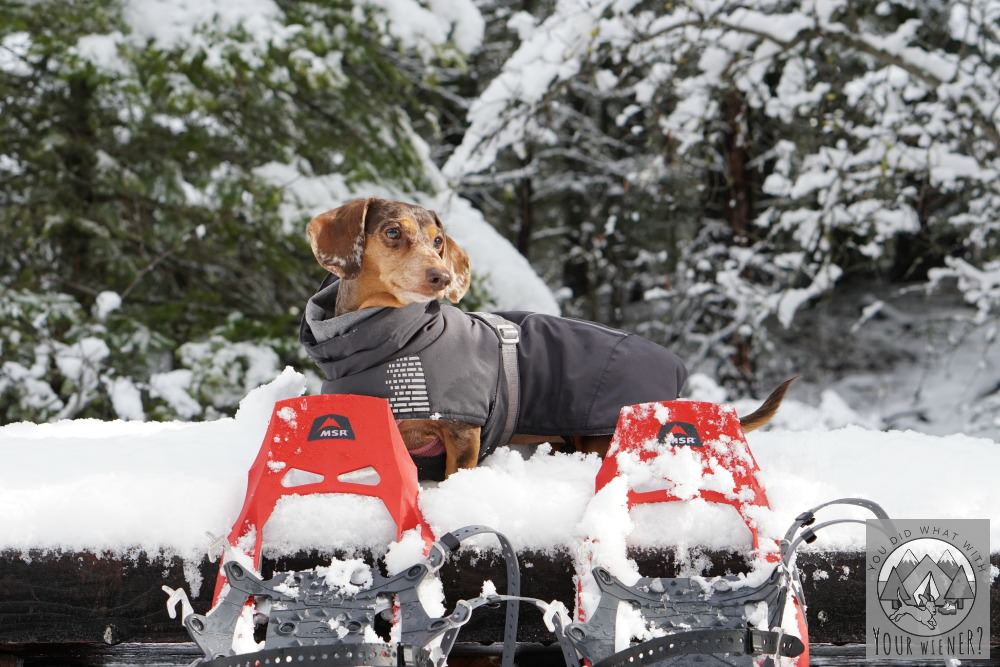 Dog Friendly Snowshoeing at Suncadia Resort