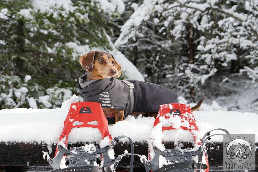 Dog Friendly Snowshoeing at Suncadia Resort
