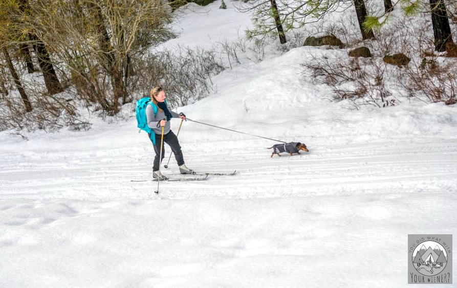 Cross country skiing with a dog at Suncadia Resort