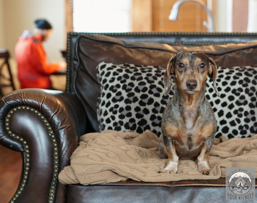 Dogs can make themselves at home at Suncadia Resort in Washington