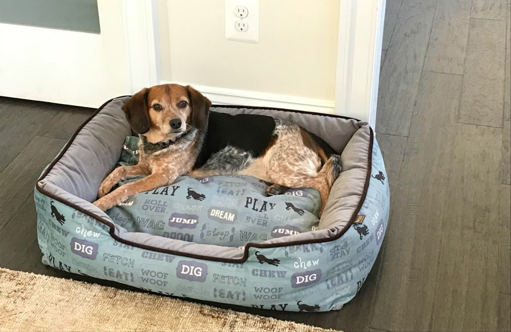 Beagle laying in a dog bed