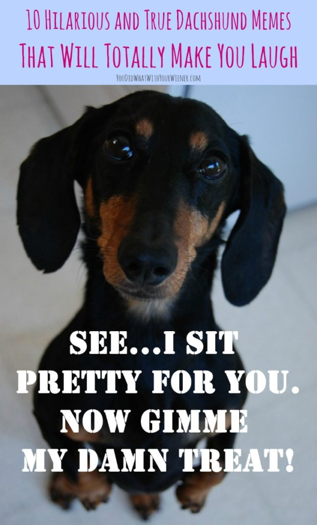 10 Totally True Dachshund Memes that will make you laugh