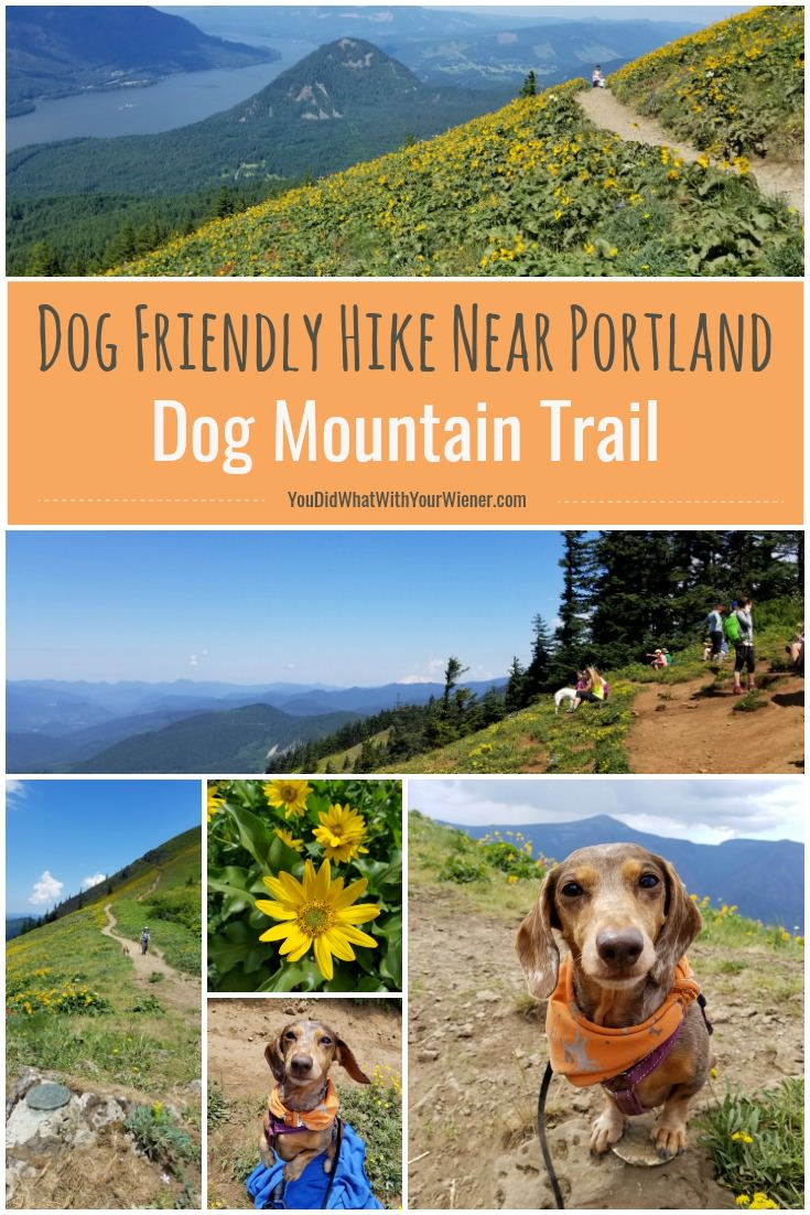 Dog Friendly Camping Near Seattle