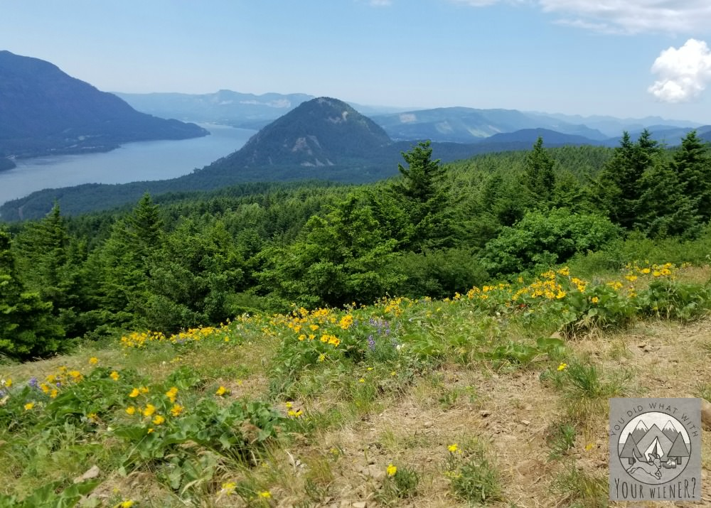 Dog Friendly Dog Mountain Hike - Lower Lookout.
