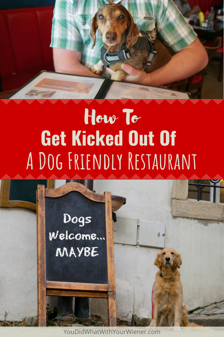 5 Mistakes That Can Get Your Kicked Out of a Dog Friendly Restaurant