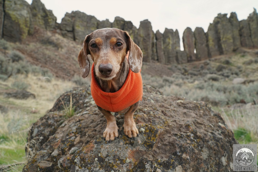 Dog hiking in eastern Washington where ticks are common