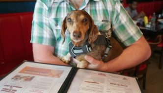 How to Get Kicked Out of a Dog Friendly Restaurant: Follow these tips to make sure you and your dog are welcome back