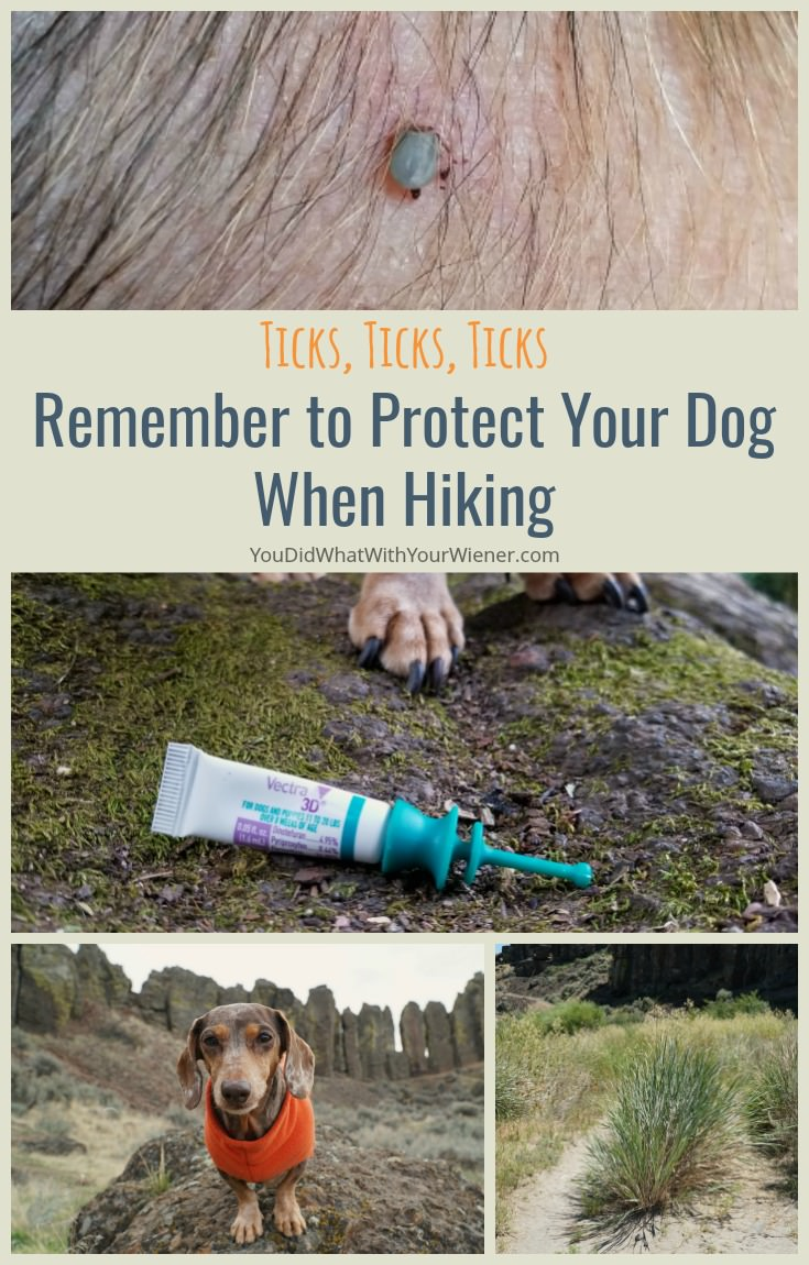 Ticks carry a lot of nasty diseases so don't forget to protect your dog