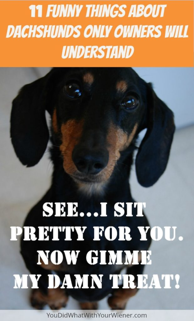 Dachshunds are special little dogs with many cute and quirky traits