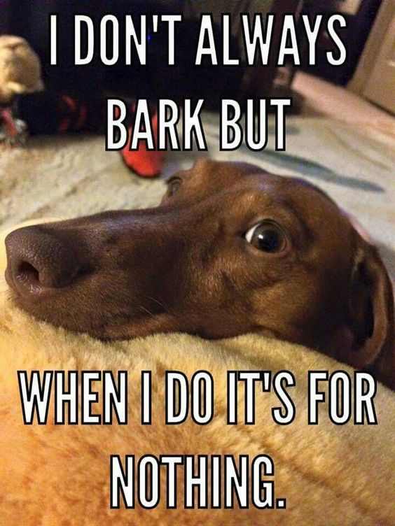 Dachshunds like to bark and will sometimes bark at nothing