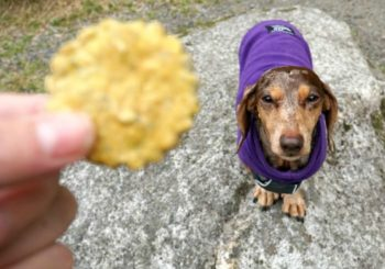 High-Quality CBD Oil for Dogs – HempMy Pet Review