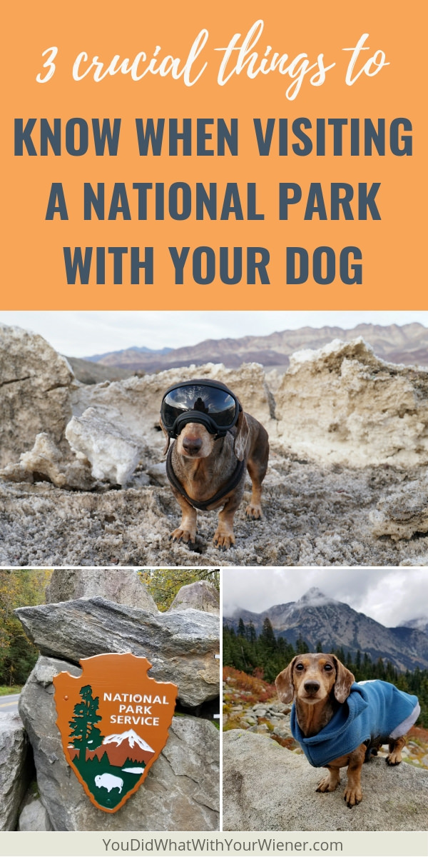Knowing these 3 things can be the difference between disappointment and an amazing trip to a National Park with your dog