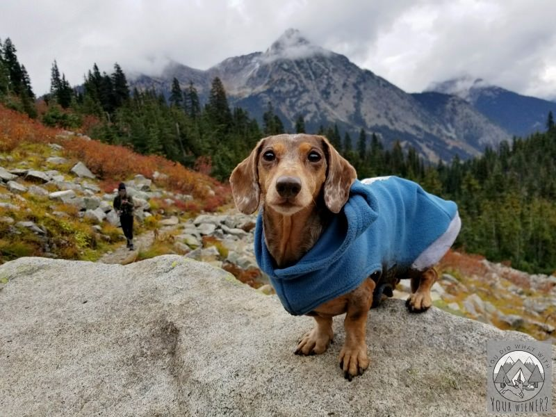 Heather-Maple Pass Trail near North Cascades National Park is dog friendly