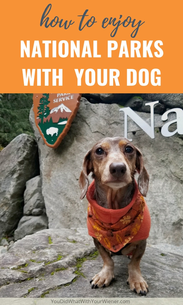 The rules for dogs in National Parks is restrictive but that doesn't mean you still can't enjoy one with your dog